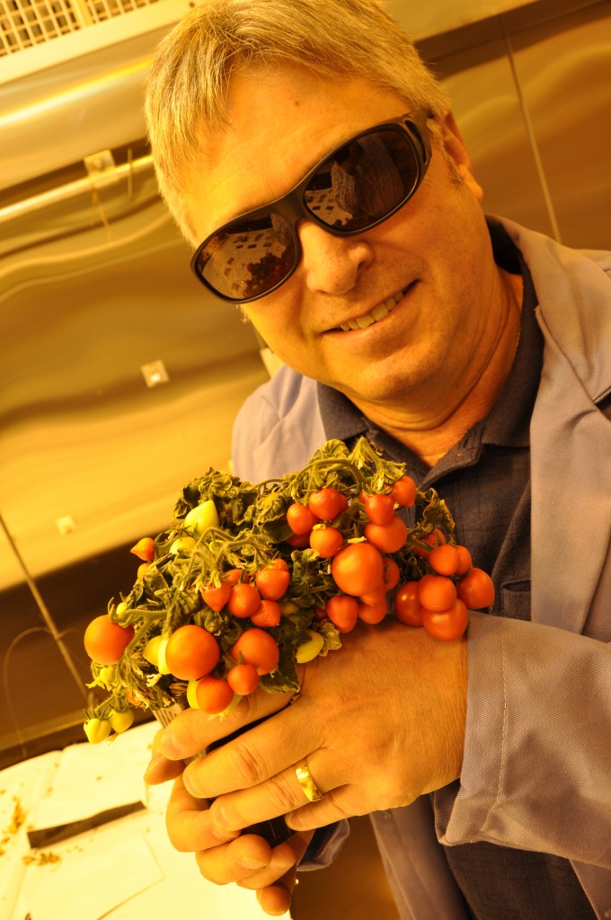 In his University of Guelph lab, Prof. Mike Dixon is helping prepare these dwarf tomatoes for space travel. Photo credit: Owen Roberts