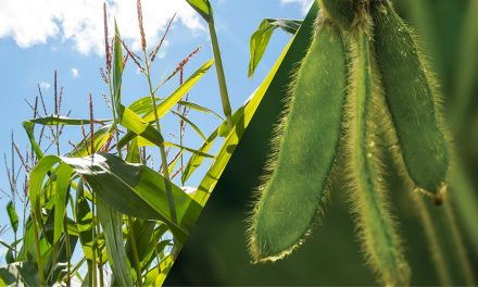 Crop swing expected for Southern Ontario