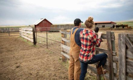 Holding back cattle requires a proactive plan