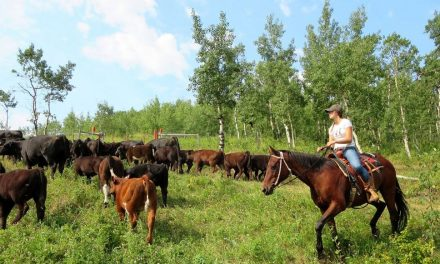 High intensity rotational grazing: that's how the bison did it