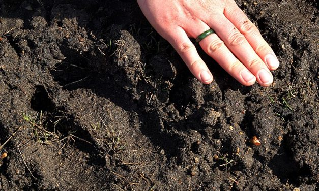 Maybe the pandemic means soil will get some respect