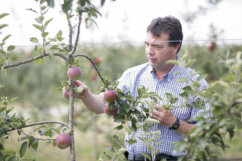 Ontario apples in demand for craft cider