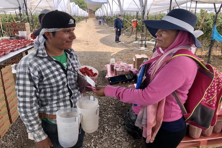 Mexican fruit producers step up to help supply hungry markets