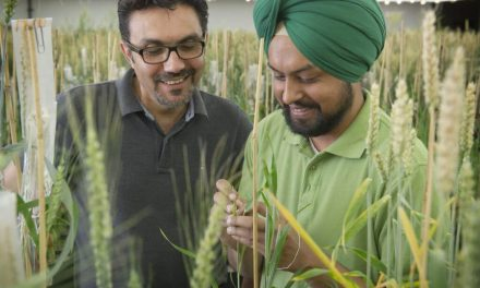 Celebrating Canada's 150 birthday by beating a tough plant disease