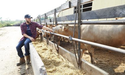 Checking in on the neighbourhood beef farmers