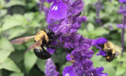 Never too late to give pollinators a hand
