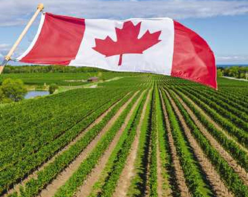 Pandemic sparks call for new look at agri-food policy