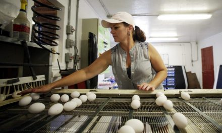 Canadians are falling back in love with eggs: The New Farm