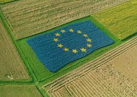 Europe opens up to GMOs while America waves a yellow flag