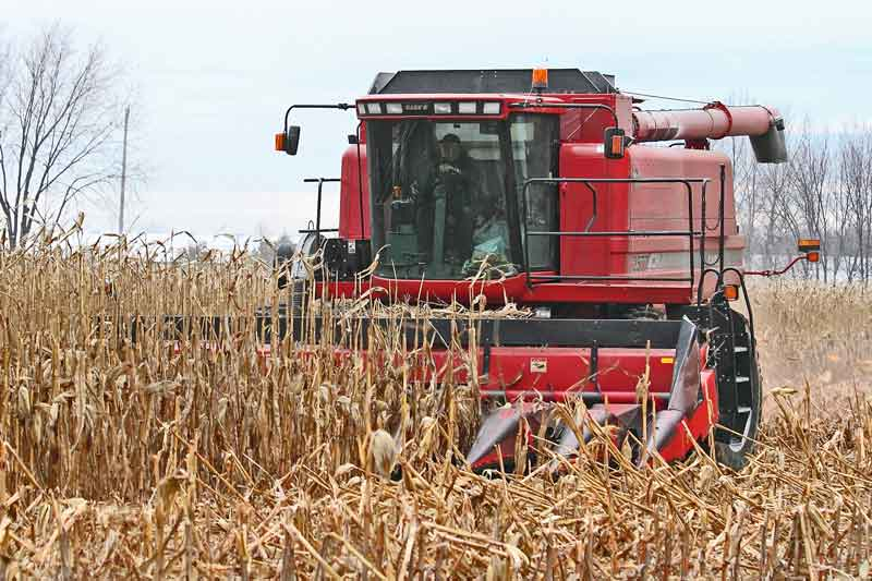 Farmers worry about a late corn harvest. Photo credit eastgwillimburywow.blogspot.com