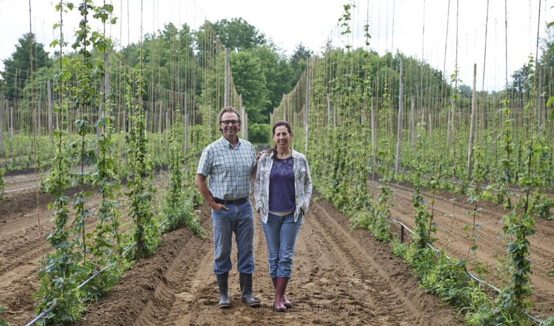 Hops grown on Ontario farms give craft beers their personality