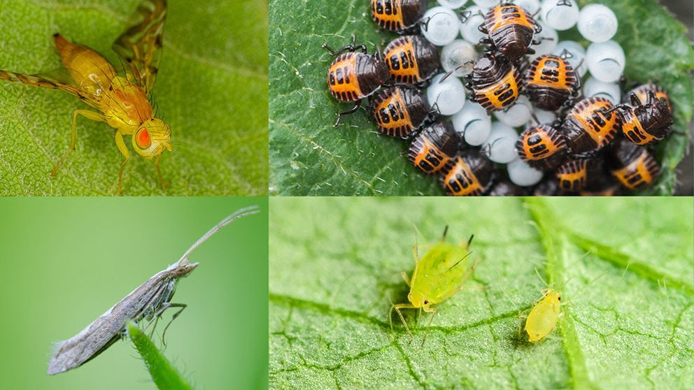 Stormy weather impacts 2019 insect forecast