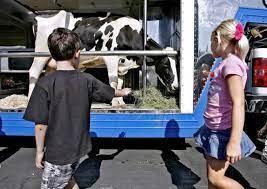 No farm visits? No problem with Adopt a Cow