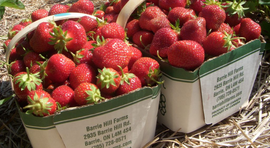 Ontario strawberries are one example of local food that consumers crave. Photo credit littlepiggy.ca