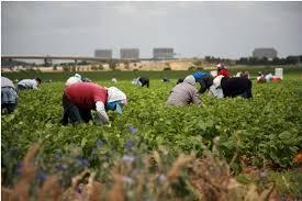 Grim outlook as Canada is short at least 3,800 seasonal farm workers