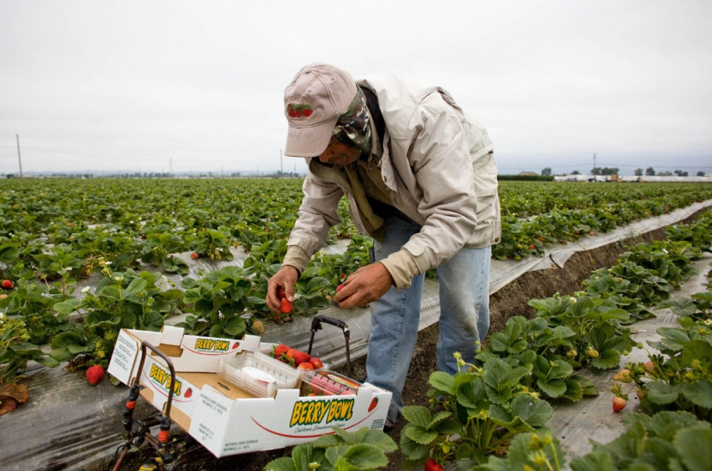 Seasonal foreign workers are vital to the agriculture industry. Photo credit thestar.com