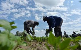 Human welfare is the star of food production